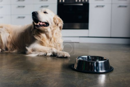 Photo pour Mignon golden retriever se trouvant près du bol en métal à la maison dans la cuisine - image libre de droit