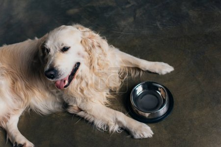 adorable golden retriever dog near metal bowl at home in kitchen