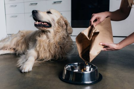 Photo for Partial view of woman pouring pet food in bowl to golden retriever dog - Royalty Free Image