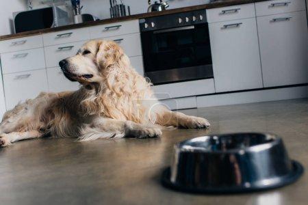 Photo pour Adorable golden retriever se trouvant près d'un bol en métal à la maison dans la cuisine - image libre de droit