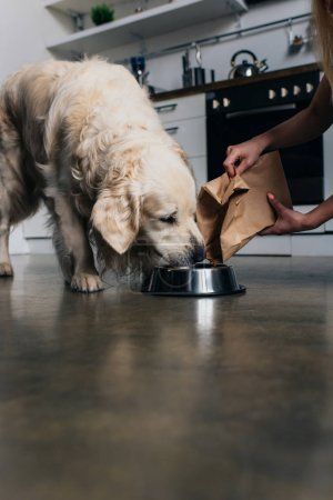 Photo for Cropped view of woman pouring pet food in bowl to golden retriever dog - Royalty Free Image