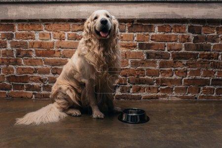 Photo pour Adorable récupérateur assis près du bol à la maison avec espace de copie - image libre de droit