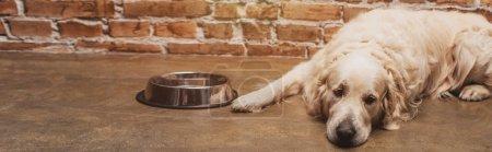 Photo pour Plan panoramique d'adorable golden retriever couché près du bol à la maison - image libre de droit