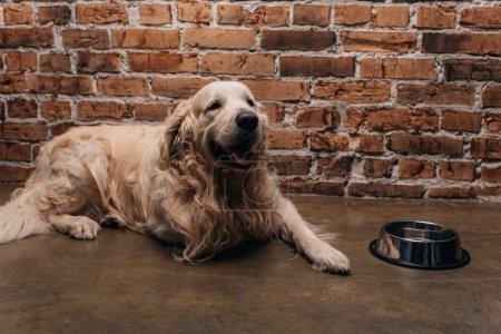 cute golden retriever lying near bowl and brick wall at home