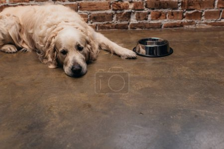 Photo for Adorable golden retriever lying near bowl and brick wall at home - Royalty Free Image
