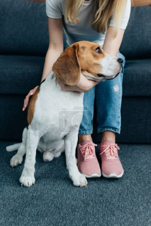 Photo for Cropped view of young woman sitting on couch and stroking beagle dog - Royalty Free Image