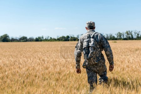 Foto de Vista trasera del militar con mochila de pie en el campo con trigo - Imagen libre de derechos