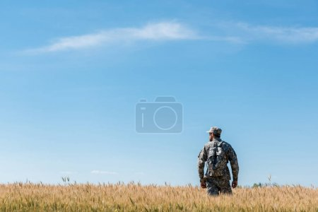 Photo for Military man with backpack standing in field with golden wheat - Royalty Free Image