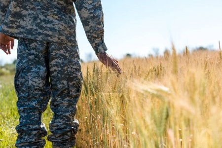 Photo for Cropped view of military man touching wheat in golden field - Royalty Free Image