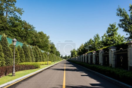 Photo for Shadows on road near green trees with leaves in summer - Royalty Free Image