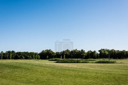 green fresh grass near trees and blue sky in park