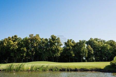 Photo pour Herbe verte et arbres près de l'étang et du ciel bleu en été - image libre de droit