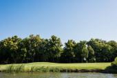 """Постер, картина, фотообои """"зеленая трава и деревья возле пруда и голубое небо летом"""""""