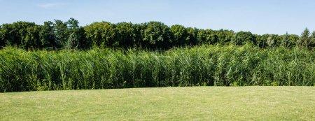 Photo pour Plan panoramique d'arbres et de plantes avec des feuilles vertes près de l'herbe dans le parc - image libre de droit