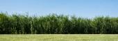 """Постер, картина, фотообои """"панорамный снимок деревьев и растений с зелеными листьями в парке"""""""