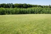 "Постер, картина, фотообои ""trees and plants with green leaves near grass in park """