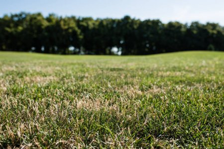 selective focus of green grass in park in summertime