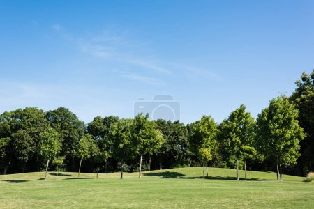 Photo for Trees with green leaves on green grass against blue sky in park - Royalty Free Image
