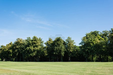 selective focus of trees with green leaves on grass against blue sky in park