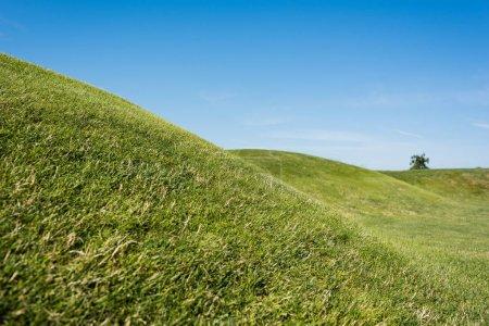 Photo pour Foyer sélectif de l'herbe verte contre le ciel bleu en été - image libre de droit