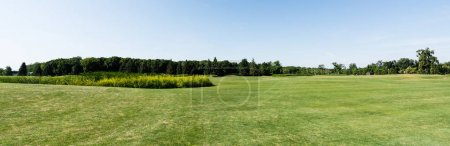 Photo for Panoramic shot of blue sky in green park with trees in summertime - Royalty Free Image