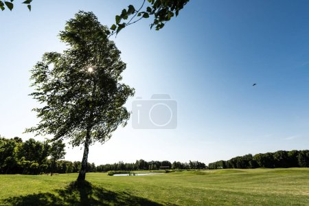 selective focus of tree with green leaves on grass in park against blue sky