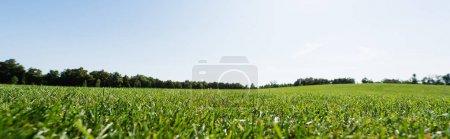 Photo pour Tir panoramique de l'herbe verte près des arbres contre le ciel dans le stationnement - image libre de droit