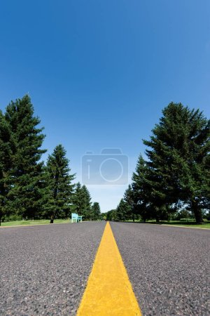 Photo for Selective focus of road with yellow line near green trees with leaves in summer - Royalty Free Image