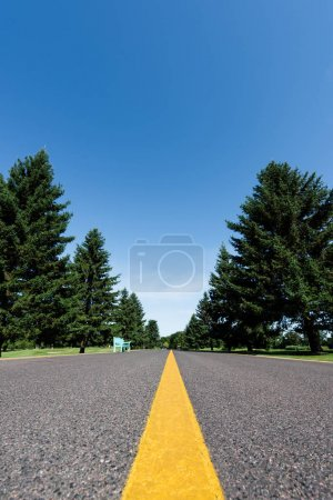 selective focus of road with yellow line near green trees with leaves in summer