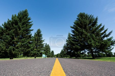Photo for Low angle view of road with yellow line near green trees with leaves in summer - Royalty Free Image
