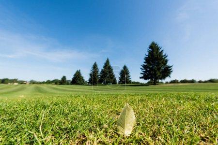 Foto de Enfoque selectivo de la hoja en la hierba verde y fresca en el parque - Imagen libre de derechos