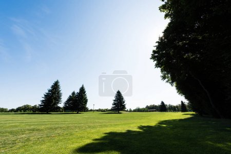 Photo pour Shadows on green grass near trees against sky in park - image libre de droit