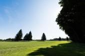 "Постер, картина, фотообои ""shadows on green grass near trees against sky in park """