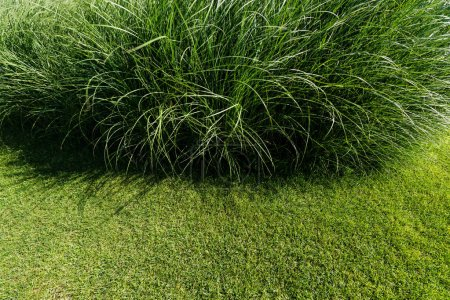 Photo for Selective focus of fresh and green grass in summertime - Royalty Free Image