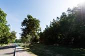 """Постер, картина, фотообои """"green trees with leaves near road against blue sky """""""