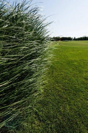 Photo pour Foyer sélectif du parc avec l'herbe verte en été - image libre de droit
