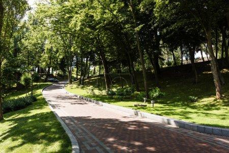 Foto de Shadows and walkway near trees with green leaves in park - Imagen libre de derechos