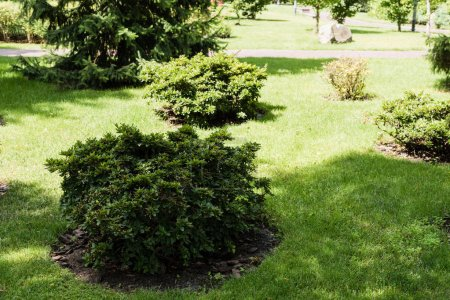 Photo pour Shadows on green bushes with leaves on grass in park - image libre de droit