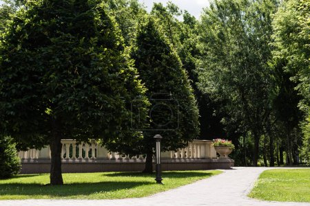Photo for Walkway near green trees with leaves in summertime - Royalty Free Image