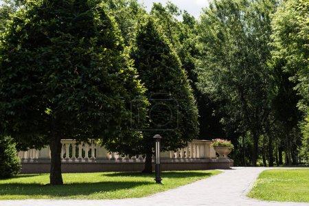 Photo pour Passerelle près des arbres verts avec des feuilles en été - image libre de droit