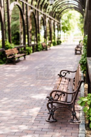 Photo for Selective focus of wooden bench near green leaves and walkway - Royalty Free Image