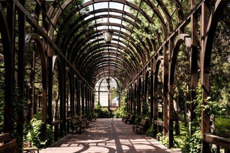 Photo pour Feuilles vertes sur les arbres et les plantes près de l'arc métallique et passerelle - image libre de droit