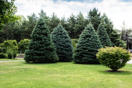 Foto de Green fir trees near bushes on grass in park - Imagen libre de derechos