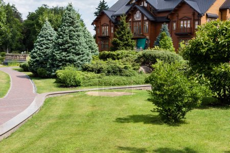 green trees and pines near house and walkway in summertime