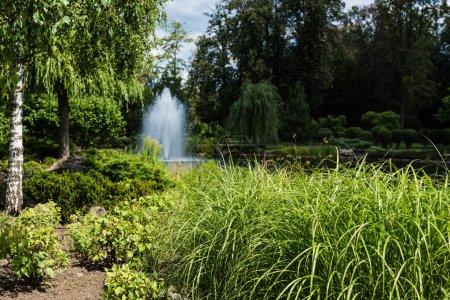 Photo pour Foyer sélectif de l'herbe verte et des usines près de l'étang avec la fontaine - image libre de droit