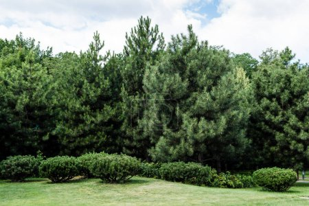 Photo for Bushes and trees with green leaves against blue sky with clouds - Royalty Free Image