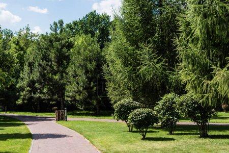 Photo pour Feuilles fraîches vertes sur les arbres et les buissons près de passerelle dans le parc - image libre de droit