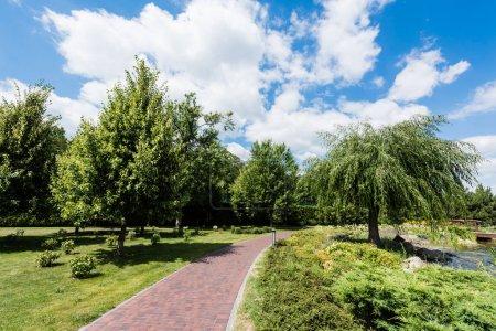Photo pour Petits buissons sur l'herbe verte près des arbres et de la passerelle - image libre de droit