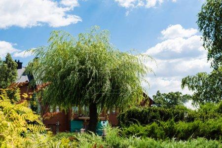 Photo pour Foyer sélectif de la maison près des arbres verts avec des feuilles contre le ciel bleu - image libre de droit