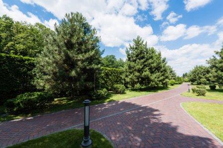 Photo pour Sapins sur l'herbe verte près de la passerelle avec des ombres en été - image libre de droit